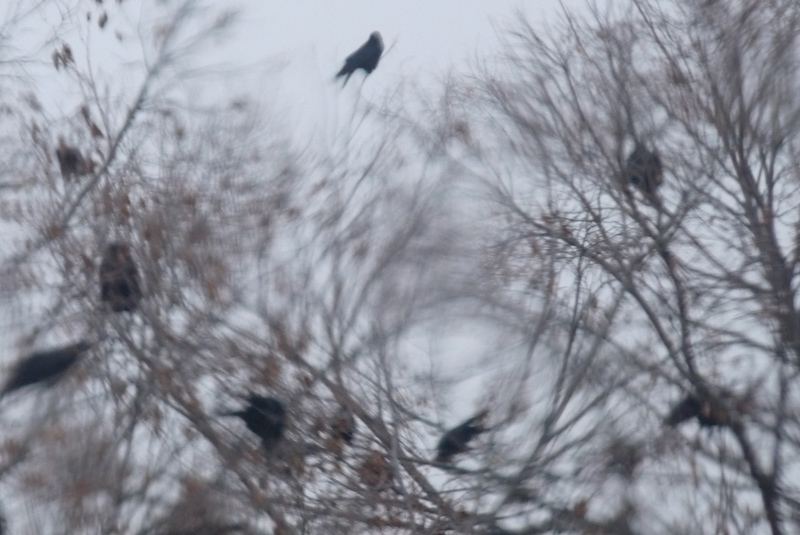 minneapolis mega murder crows 3